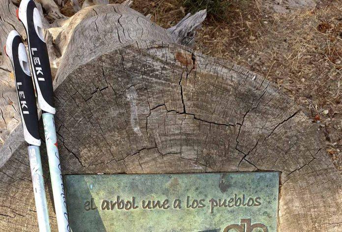 árbol y la marcha nórdica